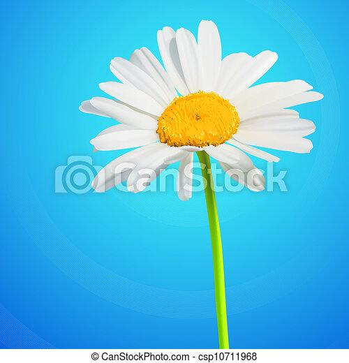 flor, camomila, flor, ilustración, fondo., vector, margarita - csp10711968