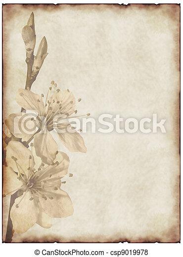 flor, cereza, papel, viejo, plano de fondo - csp9019978