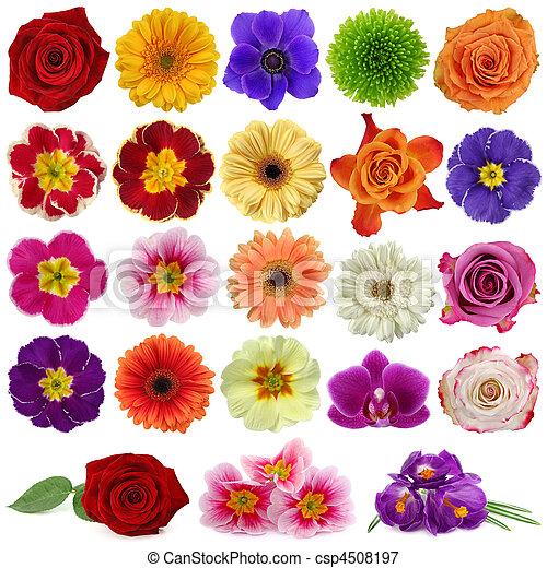 flor, colección - csp4508197