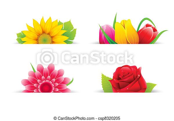 flor, coloridos - csp8320205