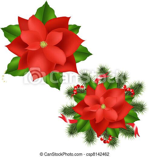 Vector Flor De Nochebuena Aislado Ilustración Plano De Fondo 2