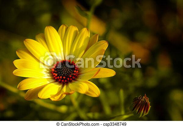 flor de primavera - csp3348749