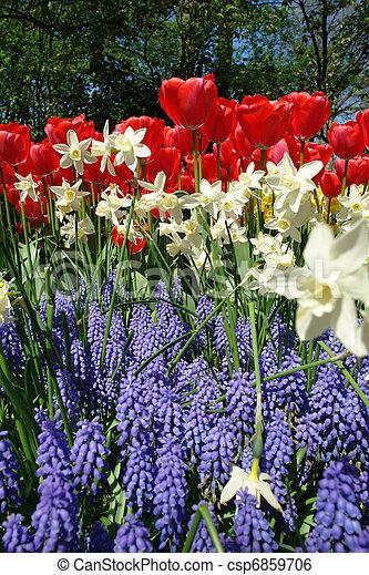 flor de primavera, keukenhof, cama - csp6859706
