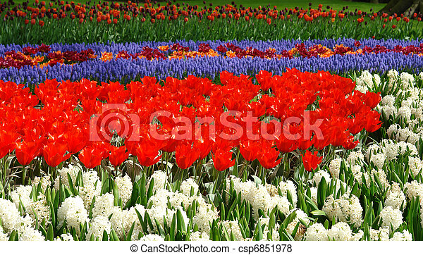 flor de primavera, keukenhof, cama - csp6851978