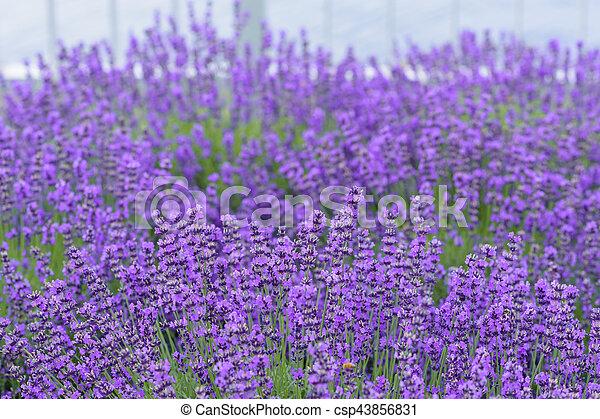 Flor Flores Lavanda Hermoso Flor Flores Jardin Lavanda