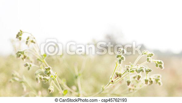 Flor de flor. - csp45762193