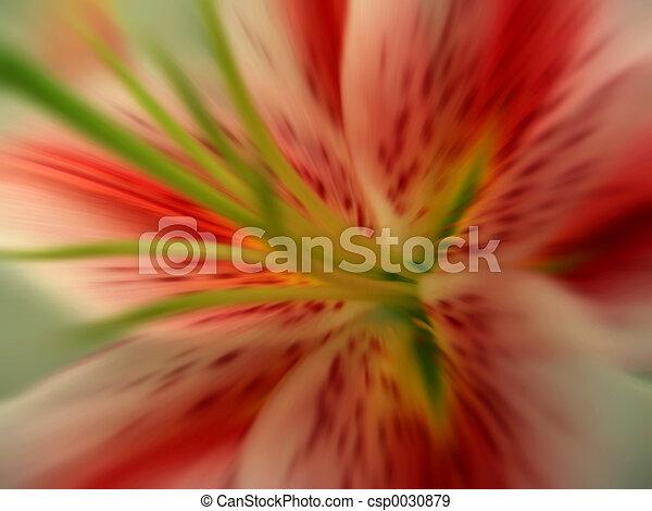 flor - csp0030879