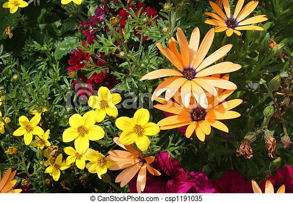 flor, frontera - csp1191035