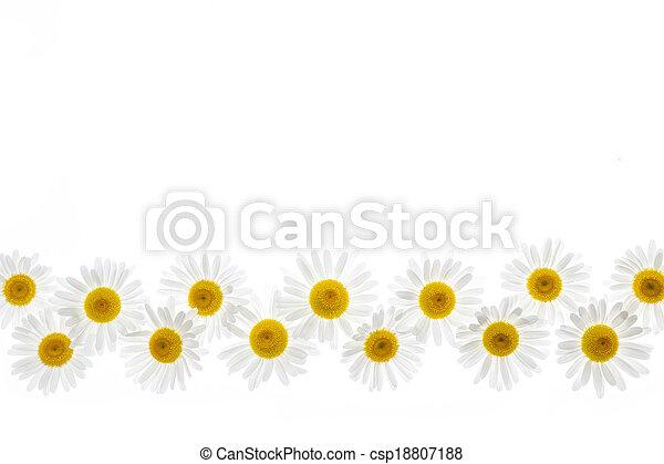 flor, frontera, margarita - csp18807188