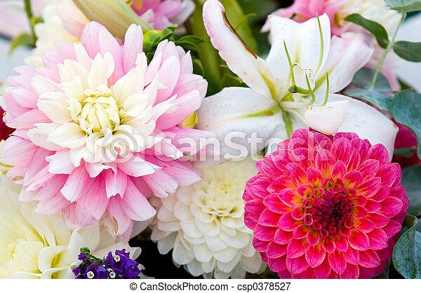 flor, fundo - csp0378527