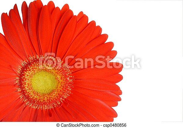flor - csp0480856