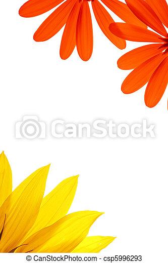 flor, natural, branca, details., em branco, decorado, página - csp5996293