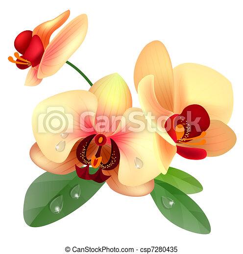 flor, orquídea - csp7280435