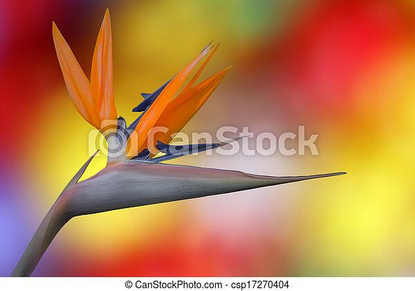 Ave del paraíso flor - csp17270404