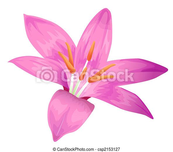 flor púrpura - csp2153127