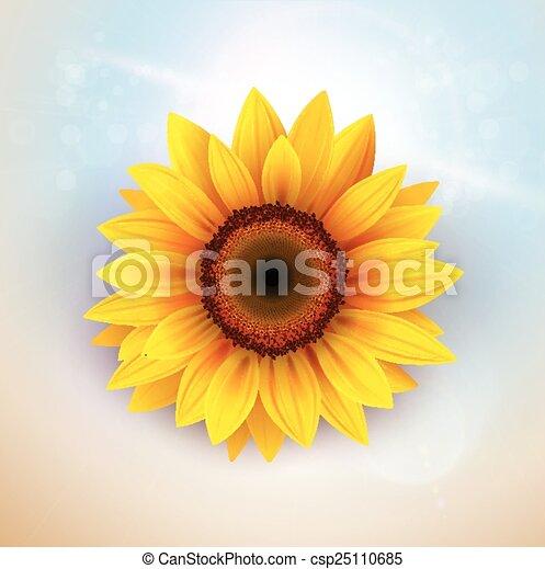 flor, plano de fondo - csp25110685
