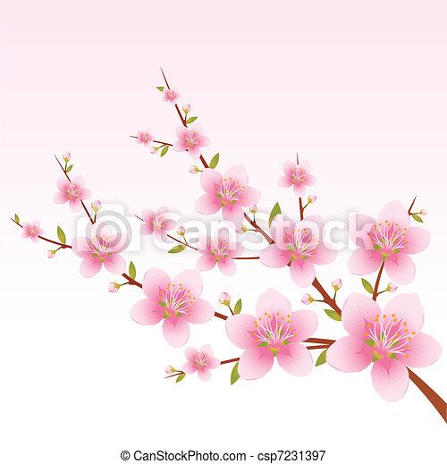 flor, primavera - csp7231397