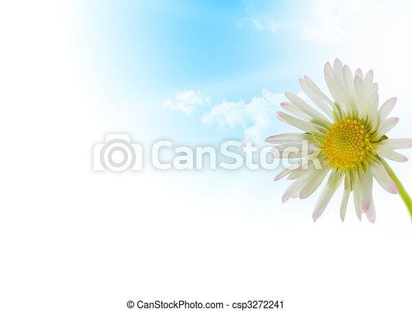 Flor de Daisy, temporada de primavera - csp3272241