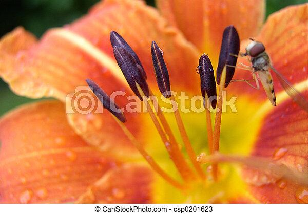 Un primer plano de una flor - csp0201623