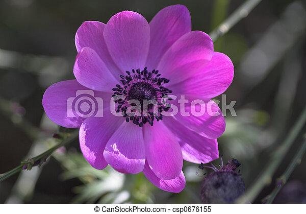 El cierre de una flor - csp0676155