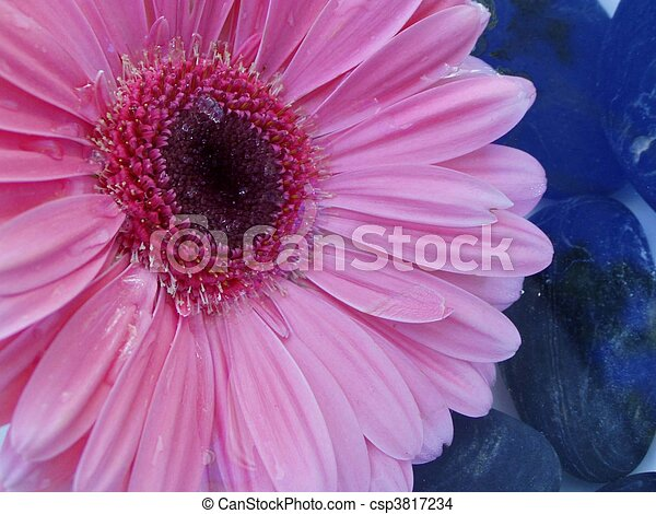 Un primer plano de una flor - csp3817234