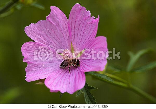 El cierre de una flor - csp0484869