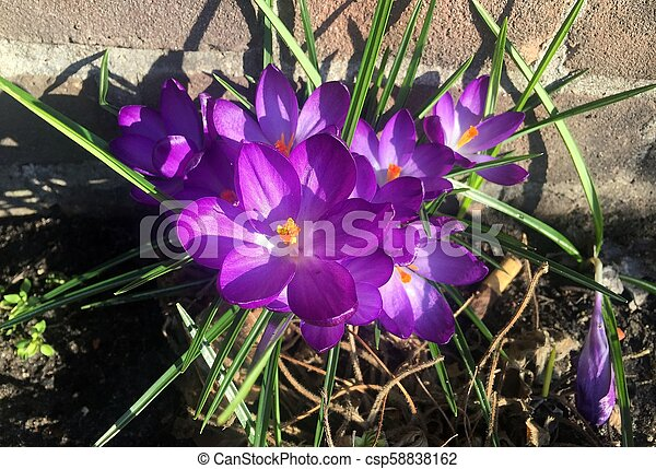 El primer plano de una flor - csp58838162