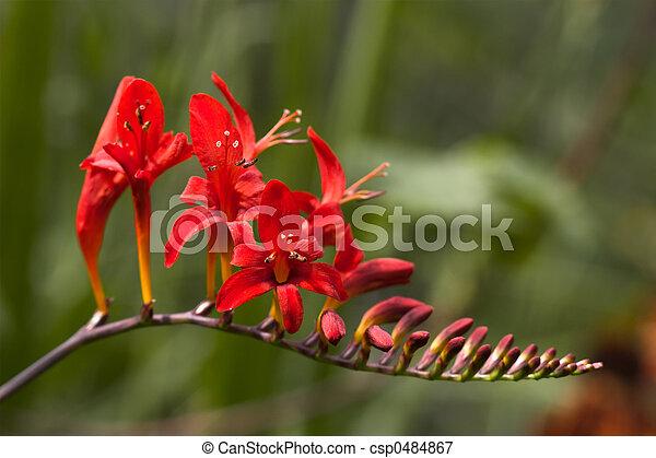 El cierre de una flor - csp0484867