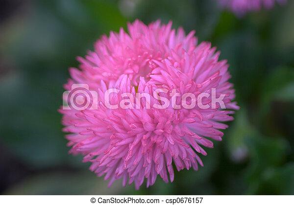 El cierre de una flor - csp0676157