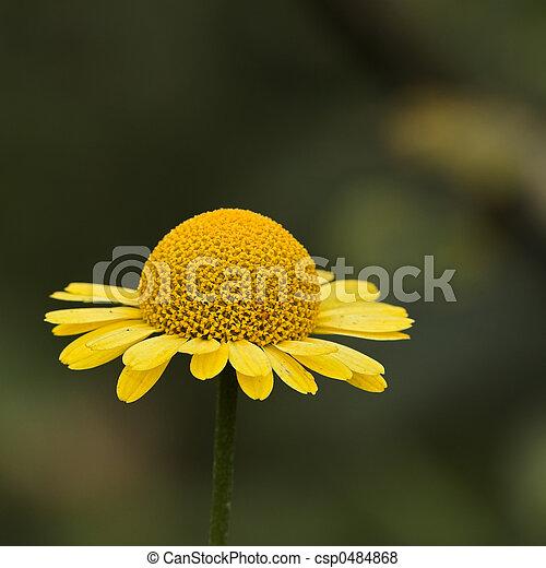 El cierre de una flor - csp0484868