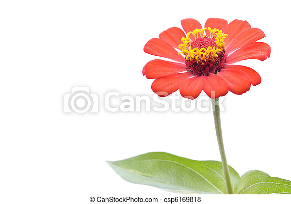 flor - csp6169818