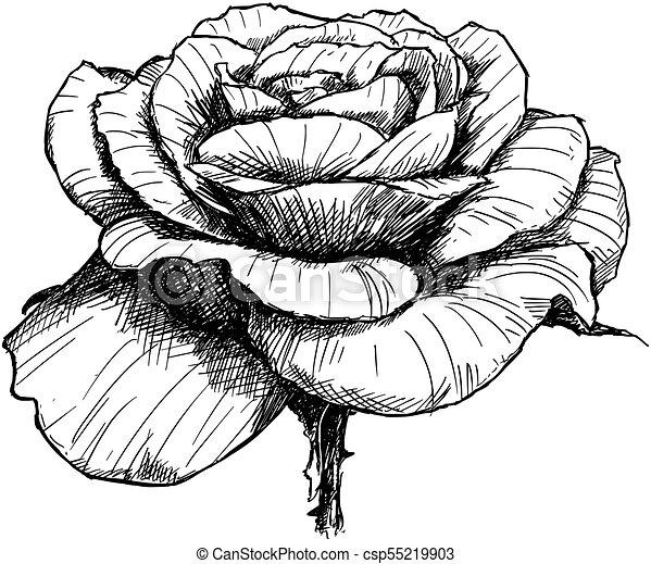 flor rosa mão vetorial flor desenho flower rosa tinta mão