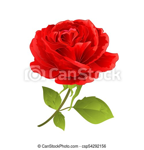flor rosa vector eps fundo vindima branco vermelho desenhar