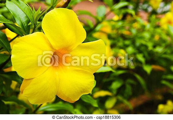 Flor tropical amarilla en el árbol - csp18815306