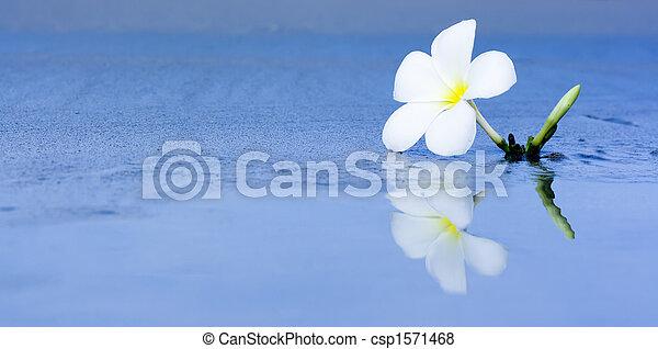 Flor tropical en la playa - csp1571468