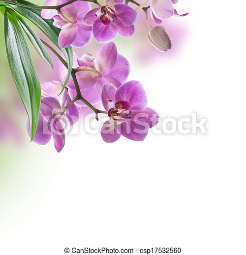 Floral background of tropical orchids - csp17532560