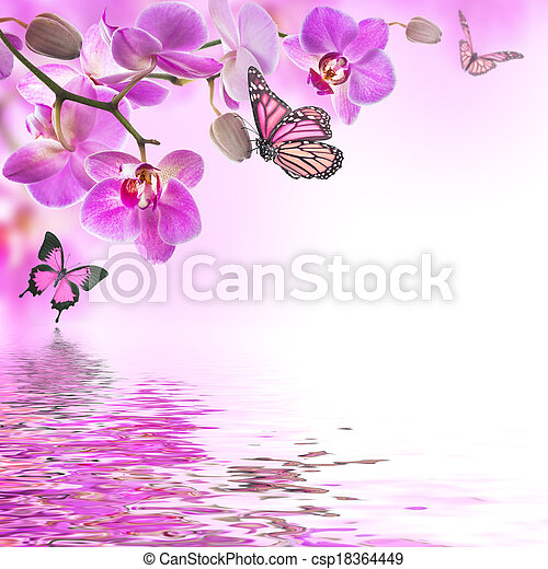 Floral background of tropical orchids and  butterfly - csp18364449