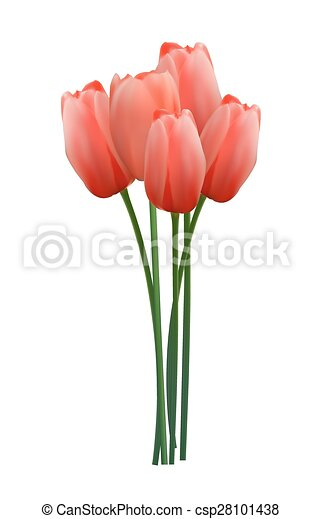 Floral background with Tulips Vector Illustration - csp28101438