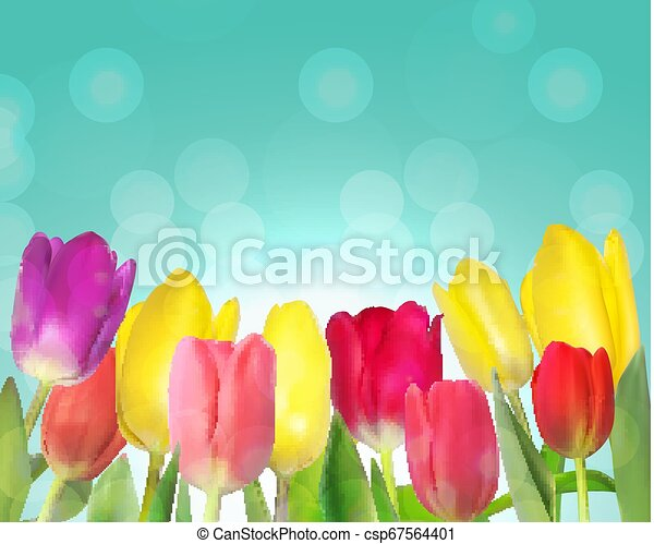 Floral background with Tulips Vector Illustration - csp67564401