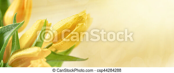 Floral background with yellow tulip flowers - csp44284288