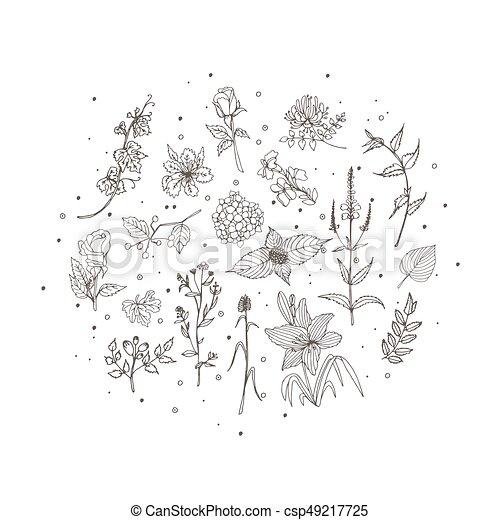 Floral Botanical Illustration