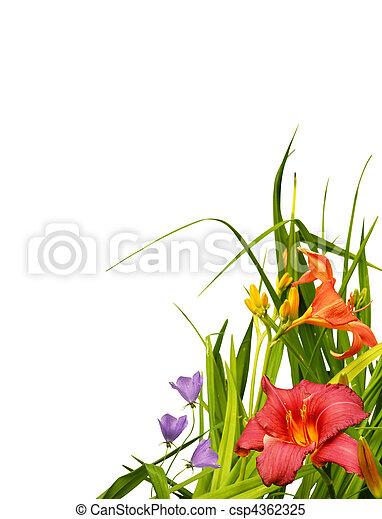 floral, coin, frontière - csp4362325