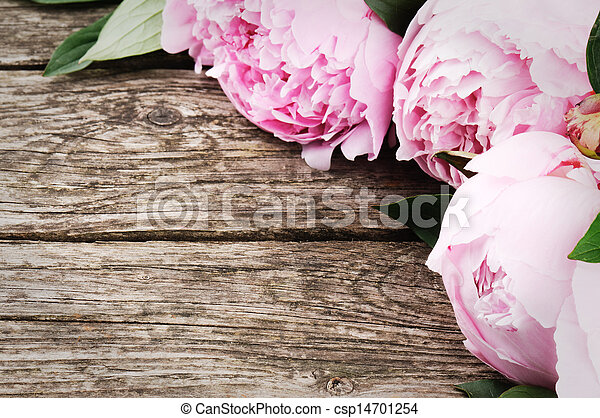 Floral frame with pink peonies - csp14701254
