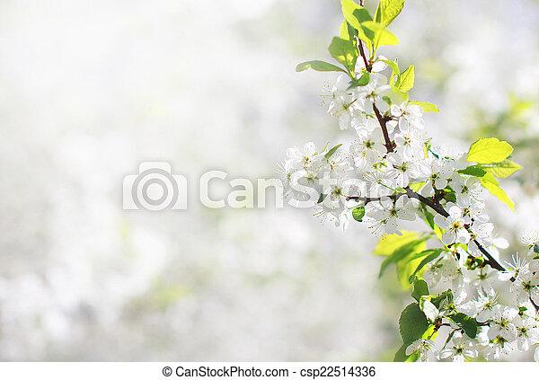 floral, lente, achtergrond - csp22514336