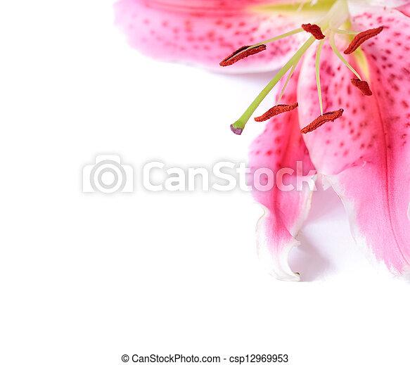 floral, lis, gabarit - csp12969953