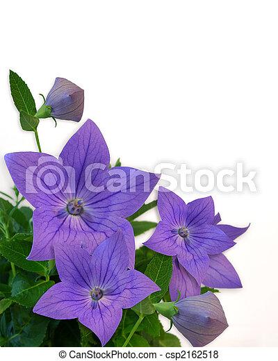 floral, pourpre, blanc, frontière - csp2162518
