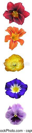 Floral Rainbow Bar - csp0464454