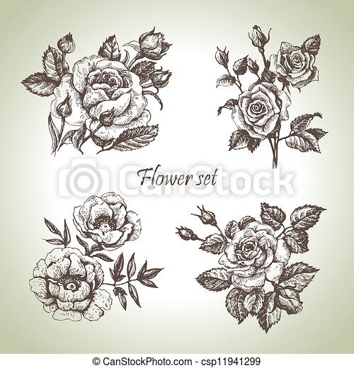 Floral set. Hand drawn illustrations of roses - csp11941299