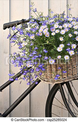 floral, vélo - csp25285024