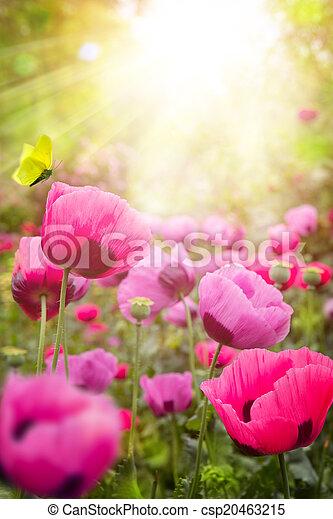floral, verão, abstratos, fundo - csp20463215